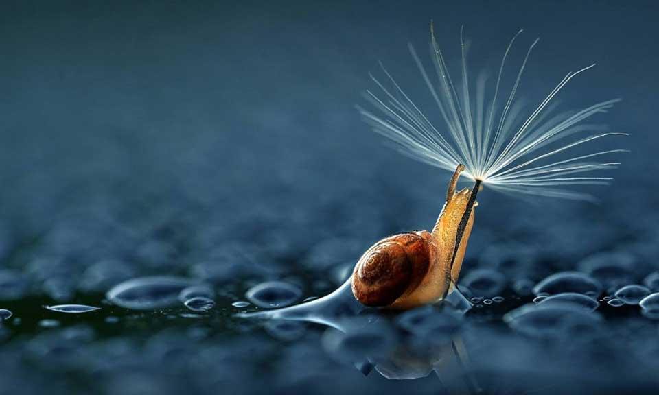 雨中小动物和它们的天然雨伞